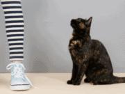 cat and stranger