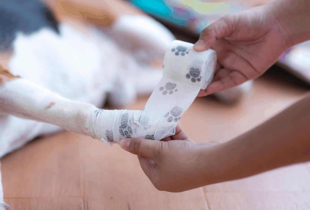 bandage paw