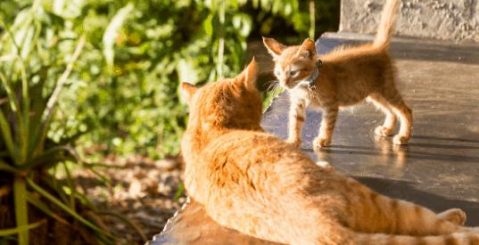 cat introduction