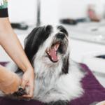 nail injury dog