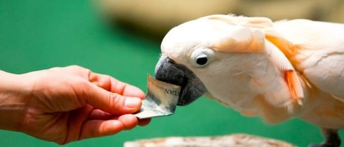 cockatoo with money