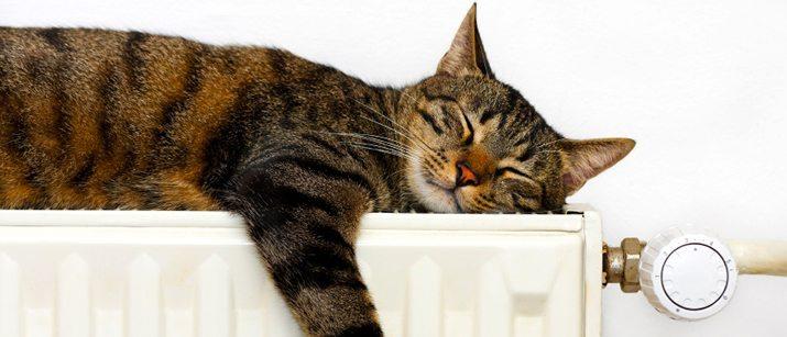 cat sleeping on heater