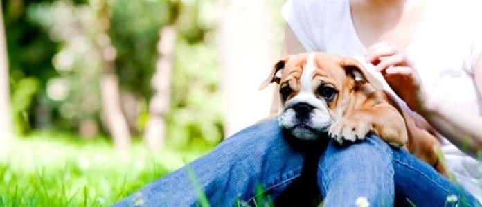 Dog on lap