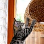 How to Build a Cat Tree and Scratching Post