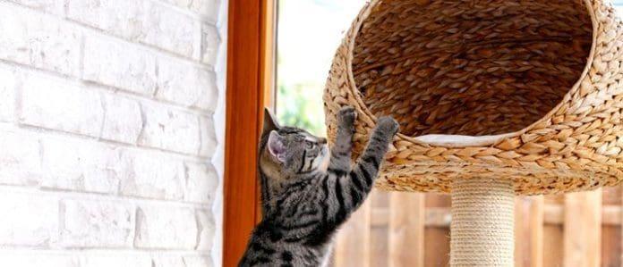 Cat scratching cat tree