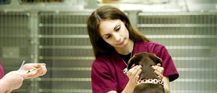 dog with vet
