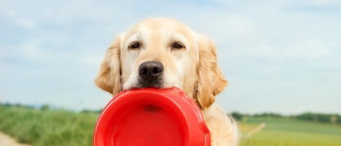 Dog holding a bowl