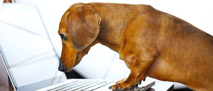 Dog on the laptop