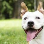 Fleas, Ticks & Worms: What You Need to Know