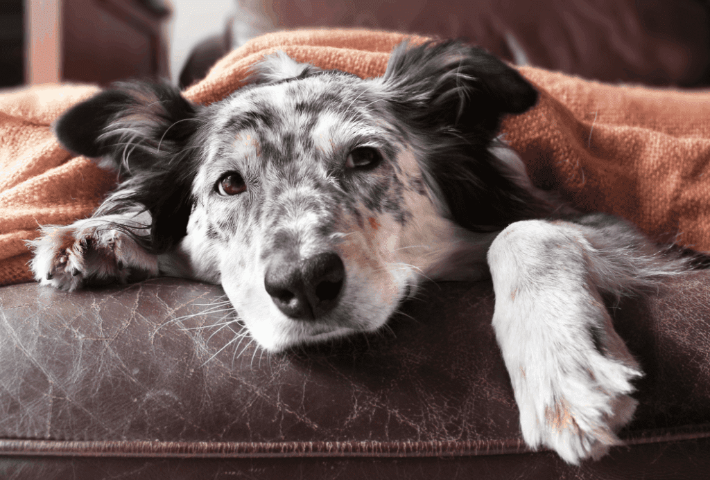 Is a Grain-Free Diet Good for my Dog?