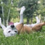Allergic Reaction in dogs