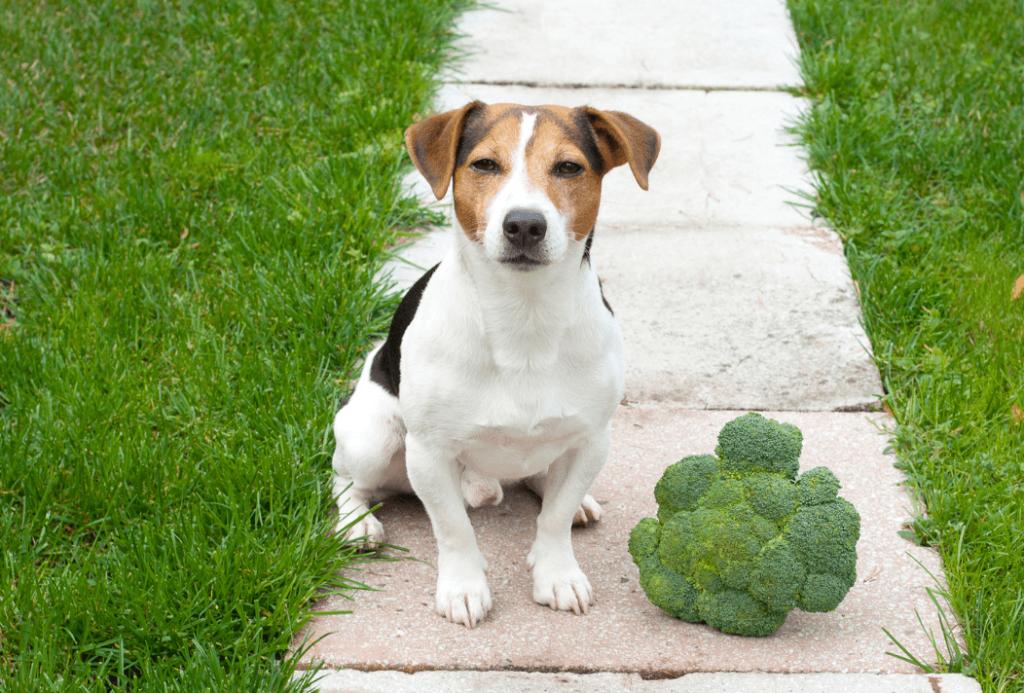 dog with Broccoli