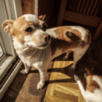 dog toilet routine