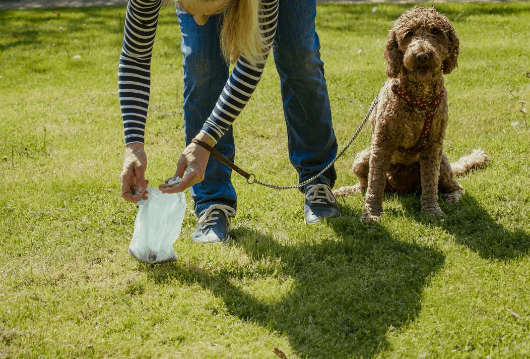 Diarrhea in pets