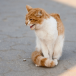 cat with puffy tail