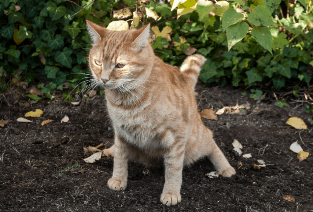 constipated cat