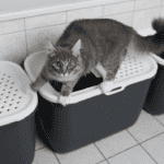 cats and litter trays