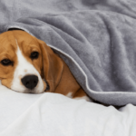 keeping dog warm after surgery