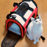 cat with cat carrier