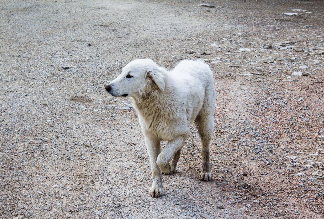 arthritis or dysplasia in older dogs