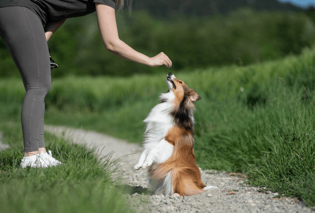 training routines for dogs