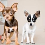 happy vet visit
