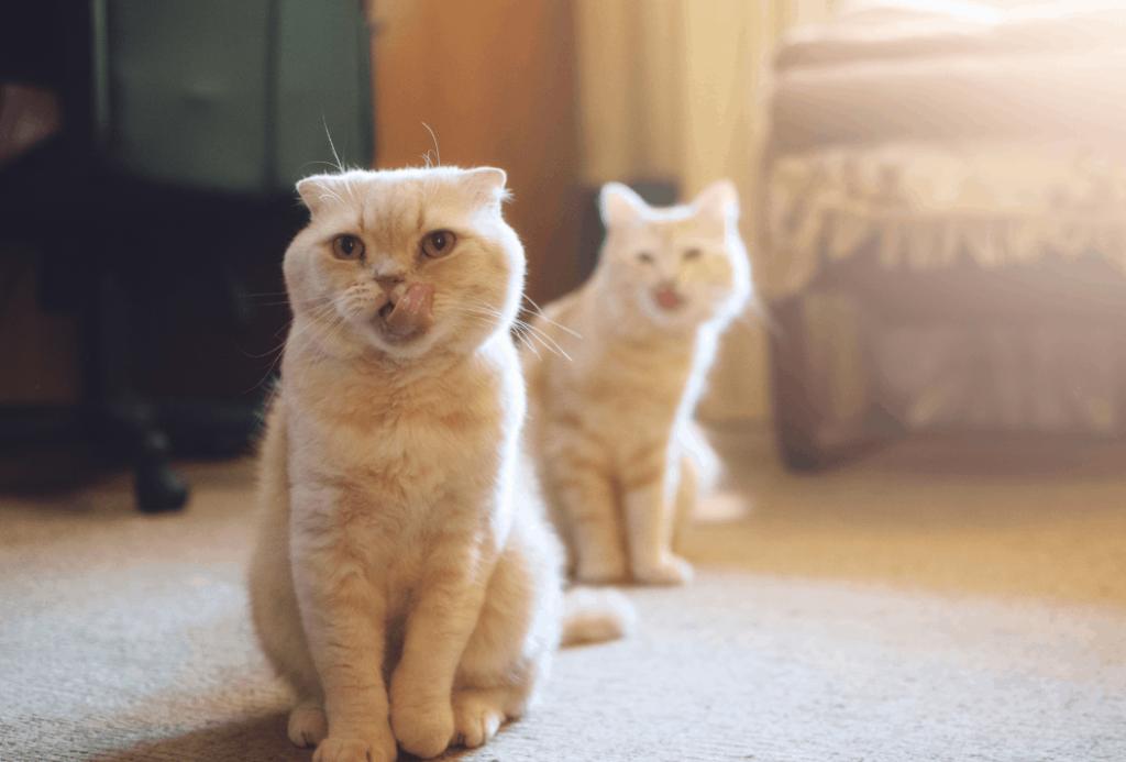 Multicat household
