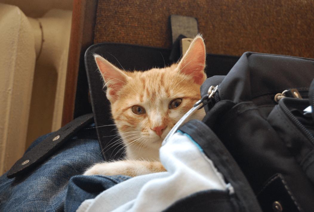 stressed kitty