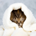 keep orphan kittens safe and warm