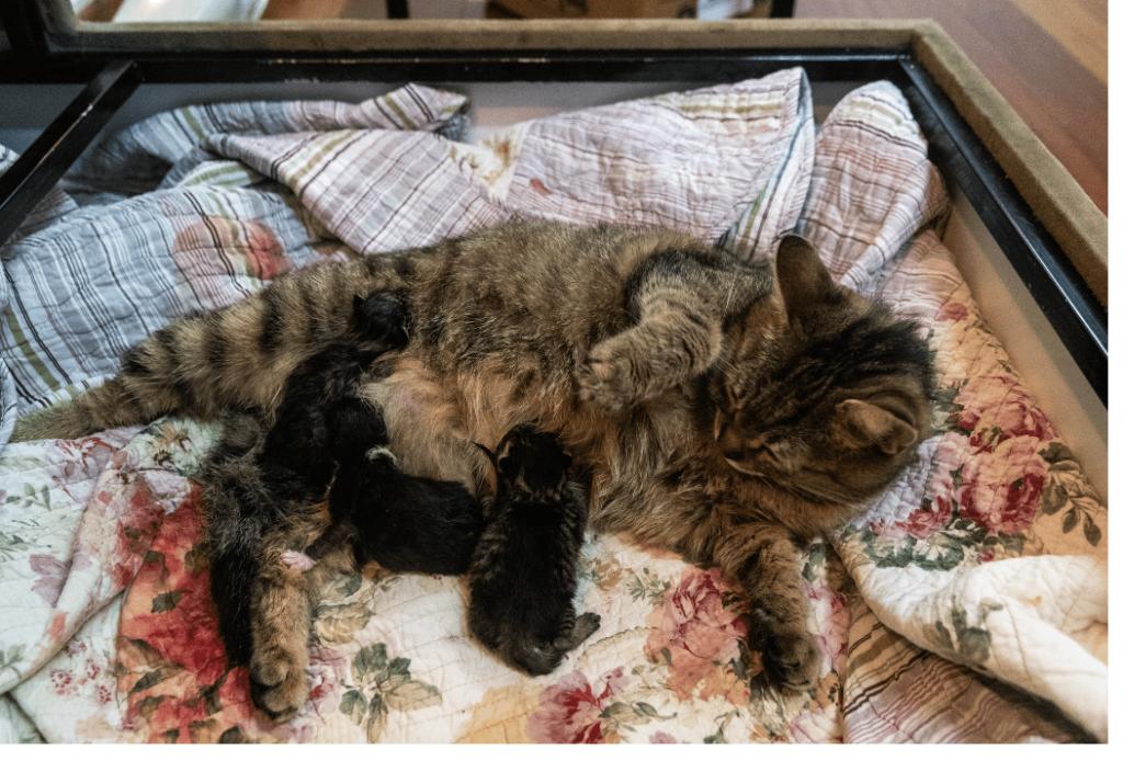 kittening box