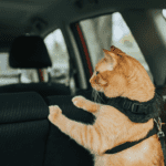 harness for road trip with cat