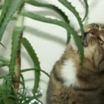 Top Common Houseplants to Beware With Cats and Dogs