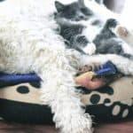 Dog-Bed-Banner[1]