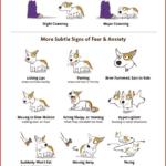 Dog-Body-Language