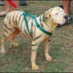 Eeyores_Birthday_Party_2009_Tigger_Dog