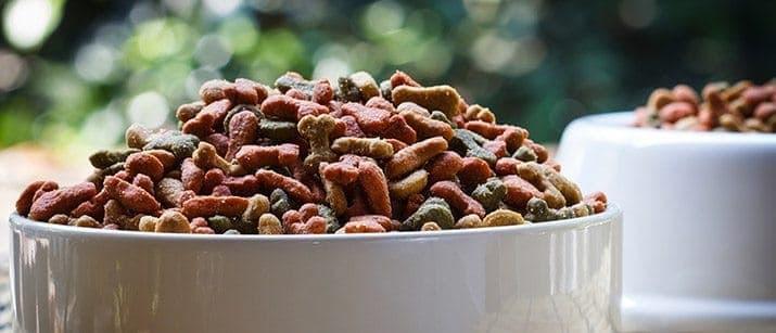 Dog food bowl with food