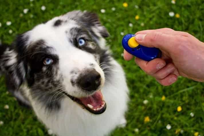 dog clicker