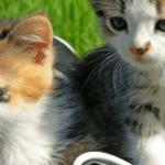 Kitten-in-Bag-Banner[1]