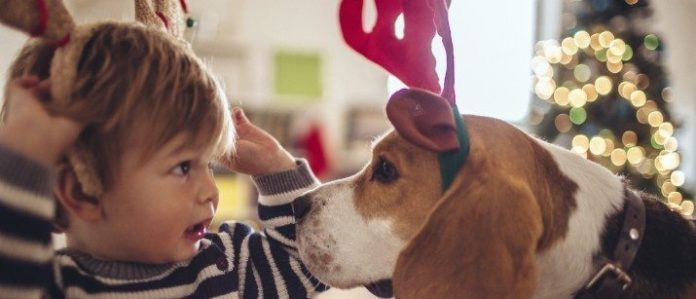 Dog and child in Christmas outfits