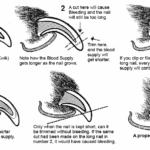 Nail-Trimming-Diagram