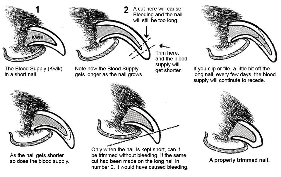 Nail Trimming Diagram