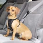 Pet-Seatbelts
