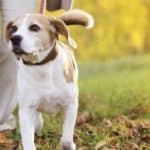 Collars, Leads and Harnesses: Which is Best for My Pet?