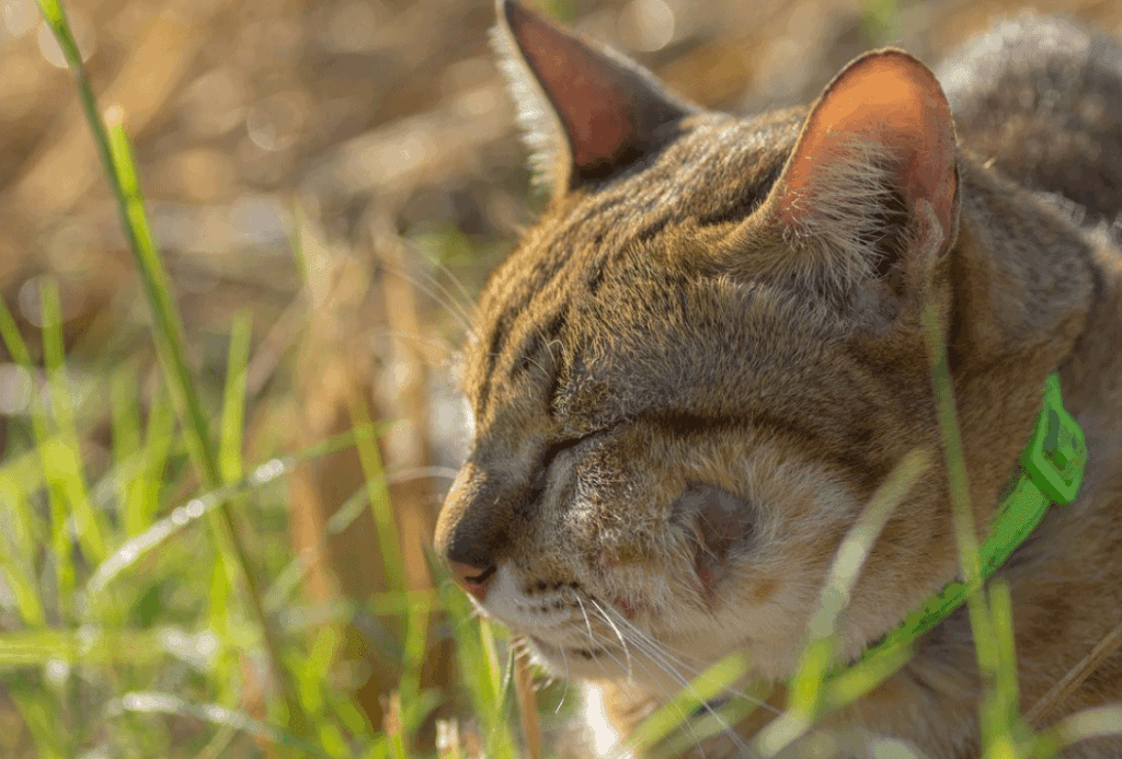 Cat Bite Abscess