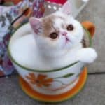 Teacup cat. Crazy or Cute?