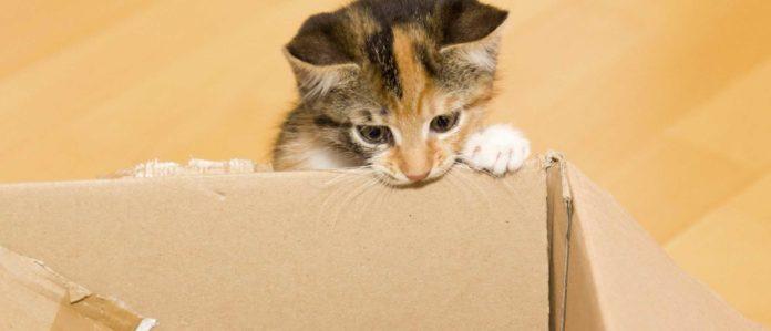 Cat looking inside a box
