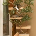 cat-tree-from-branch-353×620