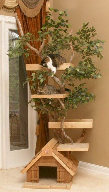 cat tree from branch