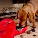 dog-chocolate-banner1