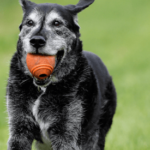 joint supplements in dogs